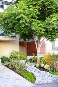 ideen baum vorgarten pflanzen Blasenesche steinfluss palmen