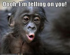 Oooooo Face this monkey is funny and funny, another funny monkey picture. From the site of the monkey pics check back for more funny monkeys Hilarious, Funny Stuff, Animal Memes, Funny Animals, Cute Animals, Animal Quotes, Memes Humor, Humor Quotes, Funny Animal Pictures