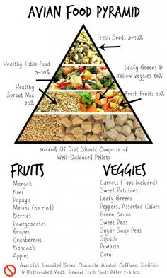 Parrot Food Pyramid