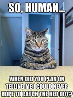 My kitties are wondering the same thing