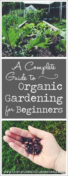 104 Best Organic Gardening Fertilizer Images In 2020 Organic
