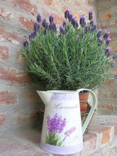 justbelieve2him:  The essence of lavender….
