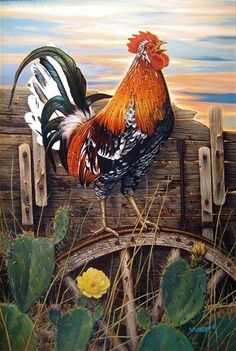 As a New Day Blooms von Scot Weir - Malerei Kunst Rooster Painting, Rooster Art, Rooster Images, Chicken Painting, Chicken Art, Beautiful Chickens, Beautiful Birds, Farm Animals, Animals And Pets