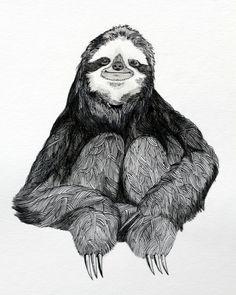 sloth illustration - Google Search