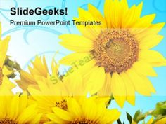 Sunflowers Beauty PowerPoint Templates And PowerPoint Backgrounds 0311 #PowerPoint #Templates #Themes #Background