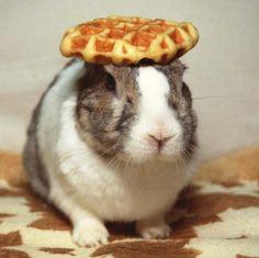 waffle rabbit