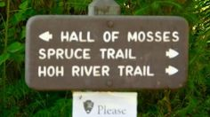 Hall of Mosses Trail (shortest trail at .8 miles), Spruce Trail (1.2 miles) and Hoh River Trail (this is a looong hike but we could do part of it for for) - all located at the Hoh Rainforest visitors center