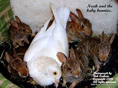 Noah the rescued Dove raised this litter of homeless bunnies at Wild Rose Rescue Ranch, East Texas | About