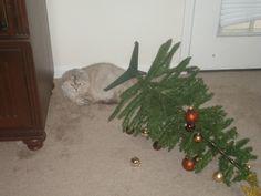 Cat, hating Christmas tree.