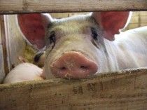 Utah becomes second state to enact Ag Gag bill #examinercom