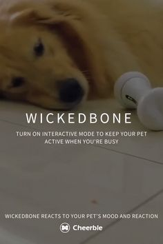 Wickedbone is designed to motivate your pet to exercise. Turn on Interactive Mode when you're busy. Wickedbone will keep your pet active and give the attention they need. #HarryPotterGamesOnline