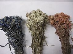 Dried #edelweiss flowers bunch - flower #bouquet weddings #craft home decoration, View more on the LINK: http://www.zeppy.io/product/gb/2/201568597095/
