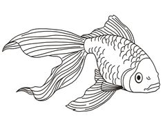 7 Printable Fish Coloring Pages for Kids Tropical Fish Coloring Pages √ Printable Fish Coloring Pages for Kids . 7 Printable Fish Coloring Pages for Kids . Printables Koi Fish Coloring Pages in Animal Coloring Pages, Coloring Pages To Print, Free Printable Coloring Pages, Coloring Book Pages, Coloring Pages For Kids, Coloring Sheets, Kids Coloring, Realistic Animal Drawings, Fish Drawings