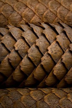 https://flic.kr/p/5kBwAE | Pining for home - 302/365 | Some pine cones that I got from my Mom's house. I really liked the detail and the simple nature of this shot.