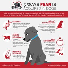 Fear in Dogs-01