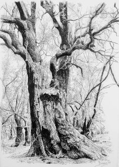 Francisco Santana (drawing) #tree #art