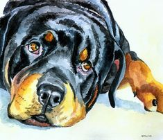 Rottweiler Greeting Card by Lyn Cook | Rottweilers, Fine Art Print ...