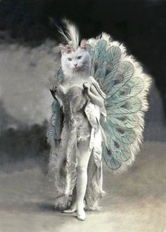 Nadia Vintage Cat 5x7 Print Anthropomorphic by AnimalFancy
