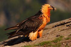 Gieren en roofvogels spotten in de Spaanse Pyreneeën | Chill-Outdoor Pyreneeën