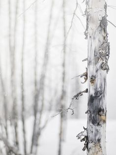 Find images and videos about winter and tree on We Heart It - the app to get lost in what you love.