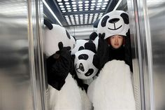 Nov. 9, 2012: Volunteers dressed as giant pandas fill an elevator at Tianfu Software Park in Chengdu, China, on Nov. 8 during the finals of the competition to enter the Chengdu Pambassador Program. Contestants are tested on their panda knowledge, physical strength & communication skills. The program, run by the nonprofit Chengdu Panda Base, offers 30 animal lovers from all over the world a chance to become panda ambassadors for a year, also known as pambassadors. (© ChinaFotoPress/Zuma…