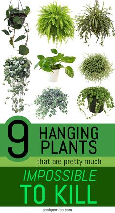 Best Indoor Hanging Plants, Plants For Hanging Baskets, Hanging Herbs, Outdoor Plants, Easy Care Plants, Plant Care, Sarasota Florida, Diy Hacks, Best Office Plants