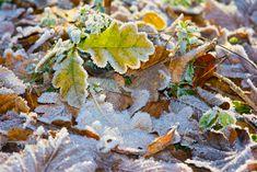 wenn es kalt wird bezaubern uns die Herbstblätter noch mehr