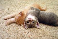 """Shhhh.....sleeping kitteh."""
