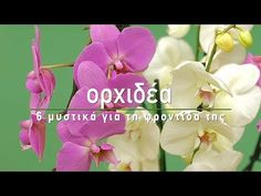 Some Ideas, Orchids, Home And Garden, Landscape, Rose, Flowers, Plants, Gardening, Brunch Recipes