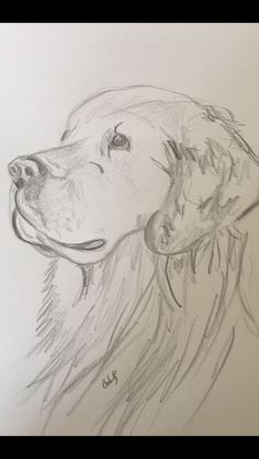 Hundezeichnungen - Drawing Tips easy dog drawing Cool Art Drawings, Pencil Art Drawings, Disney Drawings, Animal Drawings, Easy Drawings, Drawing Sketches, Dog Drawings, Animal Sketches Easy, Sketches Of Dogs