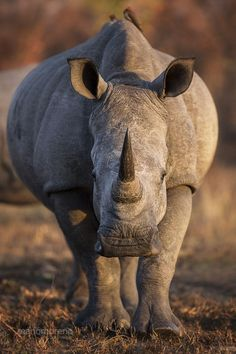 Rhino Portrait | Amazing Travel Pictures - Amazing Pictures, Images, Photography from Travels All Aronud the World