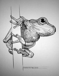 Bilddetail für -Frog pen and ink von ~ rojobe auf deviantART – Tiere Pencil Drawings Of Animals, Creature Drawings, Animal Sketches, Sketchbook Drawings, Ink Pen Drawings, Frog Drawing, Frog Illustration, Stippling Art, Frog Art