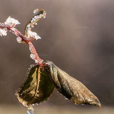 Frozen leafs by ChristianThür Photography on Creative Market