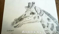 A4 sketch baby giraffe £20 + postage Art Paintings For Sale, A4, Giraffe, Sketch, Artwork, Animals, Work Of Art, Animaux, Animales