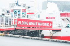 A whale watching tour in Reykjavik is a unique way to spend your time in Iceland! Here's what you need to know before you go...