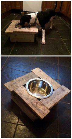 Cute dog dinner table