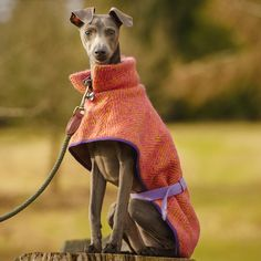 Wonderful Whippet Sew your Own Dog Coat Pattern - ideal for hound loving sewers and crafters.