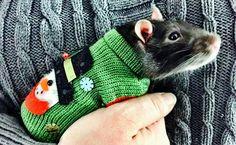 Rattie sweaters