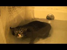 Cat Meows Underwater laughed so hard I cried!!!