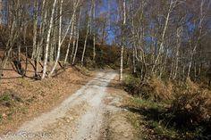 Paesaggi Biellesi: Da Graglia S.Carlo all'alpe Balma, passando dall'A...