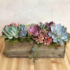 Succulent Planter Diy, Succulent Landscaping, Succulent Gifts, Succulent Gardening, Succulent Arrangements, Floral Arrangements, Succulent Bowls, Succulent Ideas, Indoor Gardening