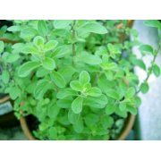 Our Sweet Marjoram live plants (two counts when you buy) is one of the most popular culinary herbs with uses from Italian to Greek cuisines, from meats to vegetables to herb butters and more; The small compact plant does well in containers or in the garden itself and attracts honey bees to your garden.