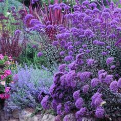 Art drought resistant plants- so pretty plants-for-my-garden