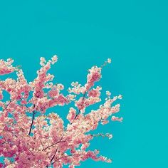pink x blue sky pinned with Bazaart