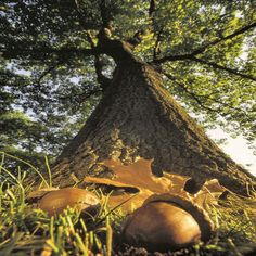 """Mighty oaks from little acorns grow"" is an old time saying meaning 'Great things may come from small beginnings.'"