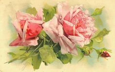 Vintage Catherine Klein roses postcard