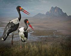 Удивительно красивые и грациозные птицы