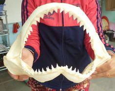 EBay shark jaws