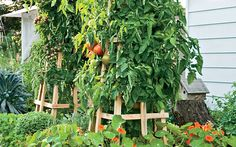 Learn how to build this stunning tomato tower.