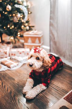 Christmas Puppy, Days Until Christmas, Tree Decorations, Oreo, Puppies, Toys, Holiday, Cute, Gifts